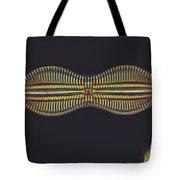 Diatom - Diploneis Crabro Tote Bag