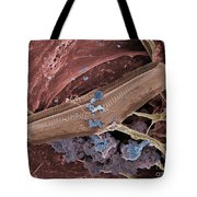 Diatom With Thermophilic Bacteria Tote Bag