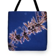 Diatoms Attached To Alga, Lm Tote Bag by Eric V. Grave