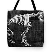 Diprotodon, Cenozoic Mammal Tote Bag