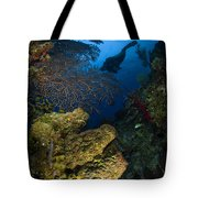 Diver Swims Over A Reef, Belize Tote Bag