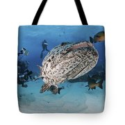 Divers Photographing A Giant Grouper Tote Bag