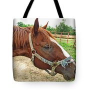 Do I Have Hay On My Nose Tote Bag