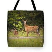 Doe And Fawn Along A Roadside Near Iron Mountain Michigan. Tote Bag
