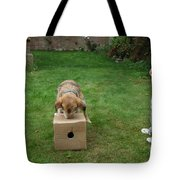 Dog Playing Tote Bag by Mark Taylor