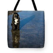Dog With Reflections And Shadow Tote Bag