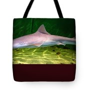 Dogfish Shark In Aquarium Tote Bag
