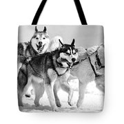 Dogs Leashed To A Chariot Tote Bag