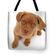Dogue De Bordeaux Puppy Tote Bag