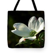 Dogwood Bloom At Sunrise Tote Bag