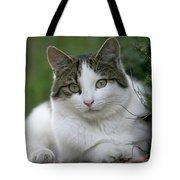 Domestic Cat Felis Catus Portrait Tote Bag