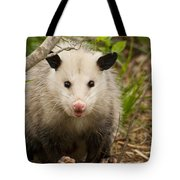 Don't Mess With Me Opossum Tote Bag