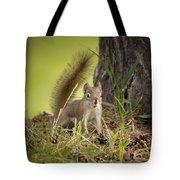 Douglas Squirrel Tote Bag