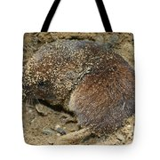 Down Right Dirty Mole Tote Bag