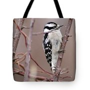 Downy Woodpecker 1 Tote Bag