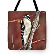 Downy Woodpecker 6 Tote Bag