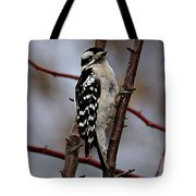 Downy Woodpecker 7 Tote Bag