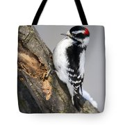Downy Woodpecker Perched In A Tree Tote Bag