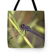 Dragonfly - Little Boy Blue Tote Bag