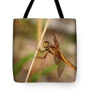 Dragonfly Looking At You Tote Bag
