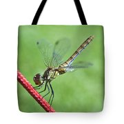 Dragonfly On A String Tote Bag
