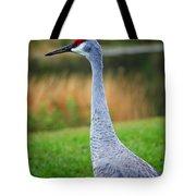 Dreaming Sandhill Crane Tote Bag