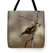 Drenched Finch Tote Bag