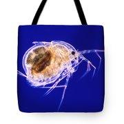 Drepanothrix Tote Bag