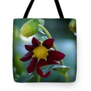 Dripping Garden 2 Tote Bag