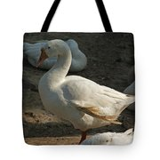 Duck Enjoying The Sun In The Winter In Delhi Zoo Tote Bag