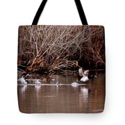 Duck - Ring-necked - Runway Tote Bag