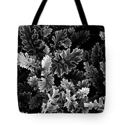 Dusty Miller Bw Tote Bag