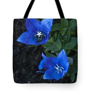Dwarf Balloon Flower Platycodon Astra Blue  Tote Bag by Steve Purnell