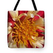 Dwarf Dahlia From The Collarette Dandy Mix Tote Bag