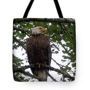 Eagle At Hog Bay Maine Tote Bag