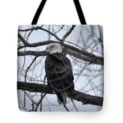 Eagle In The Wild Tote Bag