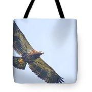 Eaglet 2012 Tote Bag