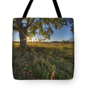 Early Evening Under An Old Poplar Tree Tote Bag