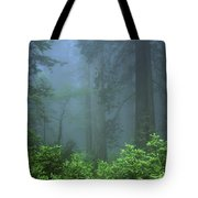 Early Morning In The Forest, Humboldt Tote Bag