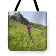 Early Purple Orchids Tote Bag