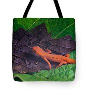 Easterm Newt Nnotophthalmus Viridescens 12 Tote Bag