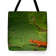 Easterm Newt Nnotophthalmus Viridescens 13 Tote Bag
