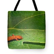 Easterm Newt Nnotophthalmus Viridescens 15 Tote Bag
