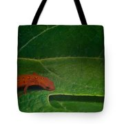 Easterm Newt Nnotophthalmus Viridescens 17 Tote Bag