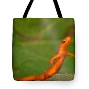 Easterm Newt Nnotophthalmus Viridescens 20 Tote Bag