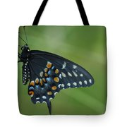 Eastern Black Swallowtail Butterfly Tote Bag