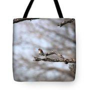 Eastern Bluebird - Old And Alive Tote Bag