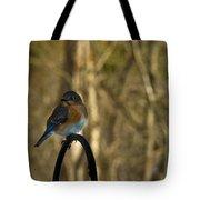 Eastern Bluebird 20 Tote Bag