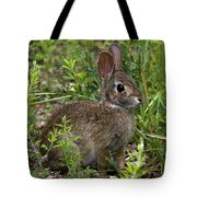 Eastern Cottontail Rabbit Dmam005 Tote Bag