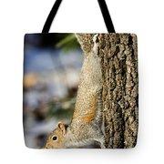 Eastern Gray Squirrel Sciurus Tote Bag